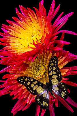 Butterfly Photograph - Butterfly On Fire Mum by Garry Gay