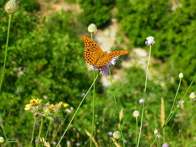Photograph - Butterfly On Flower by Alexandros Daskalakis