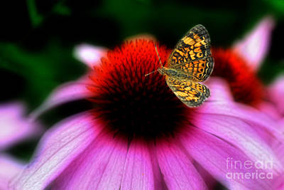 Photograph - Butterfly On Flower by Dan Friend