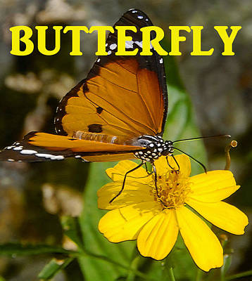 Pollinate Digital Art - Butterfly On Flower by David Lee Thompson
