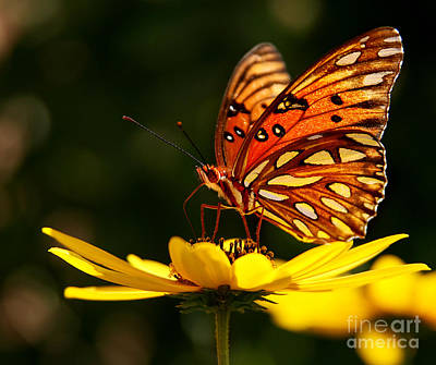 Butterfly On Flower Art Print by Joan McCool