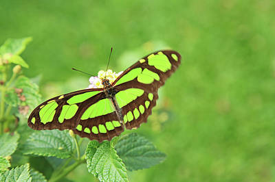 Photograph - Butterfly On Flowers by Hiroshi Higuchi