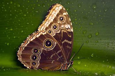 Butterfly On Green  Art Print by Sebastiaan Bosma