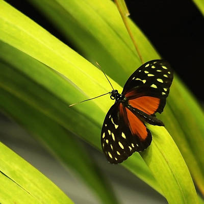 Renewing Photograph - Butterfly On Leaves by Art Block Collections