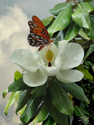 Photograph - Butterfly On Magnolia Blossom by IM Spadecaller
