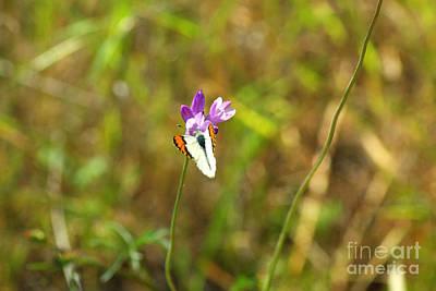 Butterfly On Purple 1.2608 Art Print by Stephen Parker