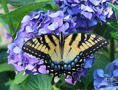 Blueish Photograph - Butterfly On Purple Hydrangea by Kathleen Garman