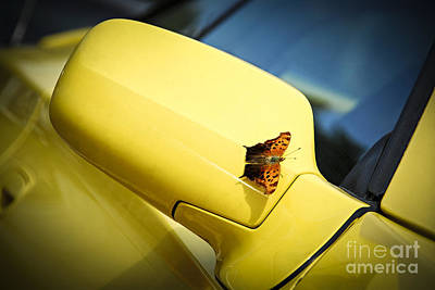 Butterfly On Sports Car Mirror Print by Elena Elisseeva
