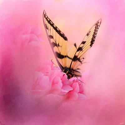Fuchsia Pink Photograph - Butterfly On The Azaleas by Jai Johnson