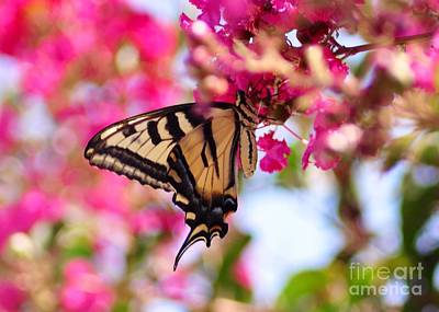 Butterfly On The Crepe Myrtle. Art Print
