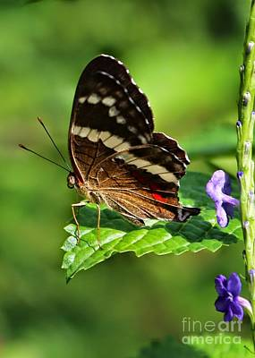 Photograph - Butterfly On The Edge by Carol Groenen