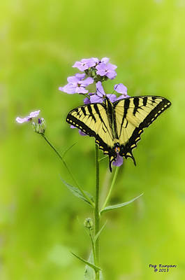 Photograph - Butterfly On Wild Phlox by Peg Runyan