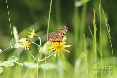 Photograph - Butterfly On Wildflower by Leone Lund
