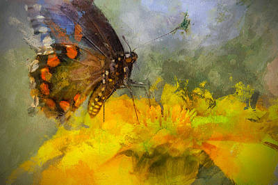 Laura James Photograph - Butterfly On Yellow Flower by Laura James