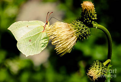 Photograph - Butterfly Or Leaf by Patrik Lovrin