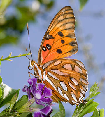 Butterfly Art Print by Paulette Moran Dalton