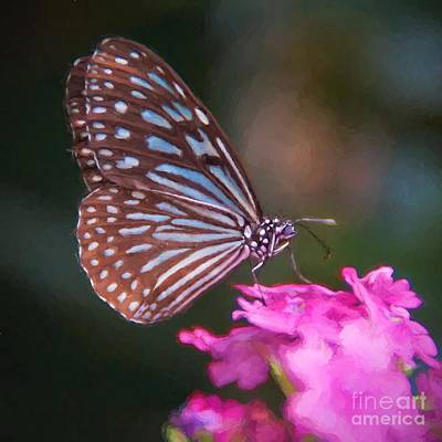 Photograph - Butterfly by Peggy Hughes