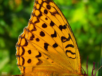 Photograph - Butterfly Petal by Alexandros Daskalakis