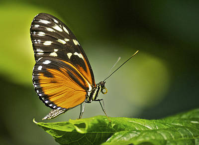 Wilderness Camping - Butterfly Profile by Michael Peychich