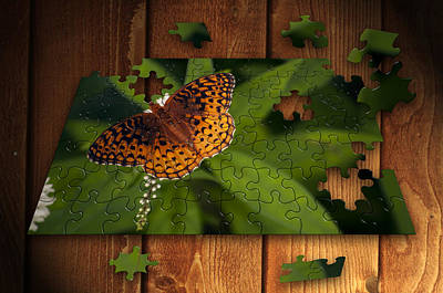 Photograph - Butterfly Puzzle by Thomas  Jarvais