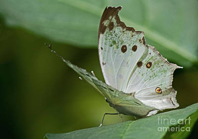 Photograph - Butterfly Ready For Take Off by Sandra Clark