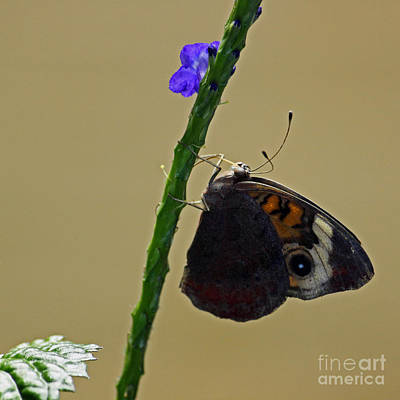 Close Up Photograph - Butterfly Series I by Suzanne Gaff
