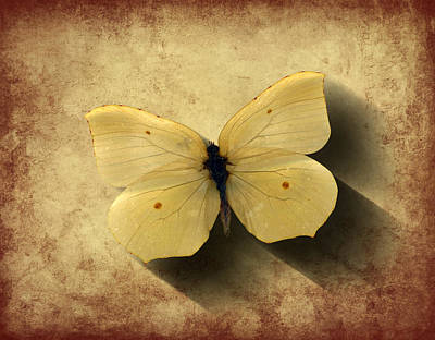 Digital Art - Butterfly 5 by Steve Ball