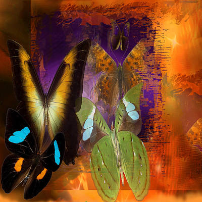 Old Masters - Butterflies Shadow  by Joseph Mosley