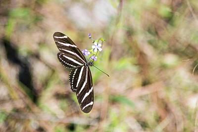 Photograph - Butterfly by Shannon Harrington