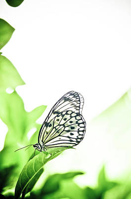 Insect Photograph - Butterfly by Shaun