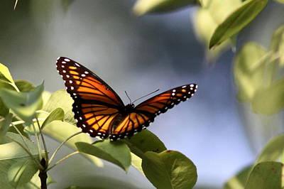 Butterfly -  Soaking Up The Sun Art Print by Travis Truelove