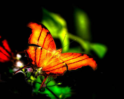 Outdoors Photograph - Butterfly Spirit by Mark Andrew Thomas