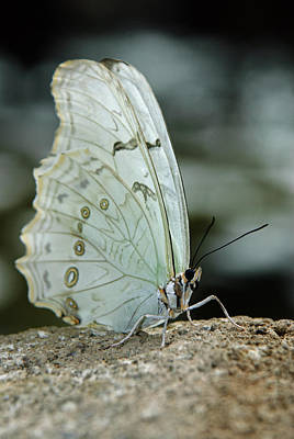 Photograph - Butterfly Spirit by Tam Ryan