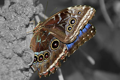 Photograph - Butterfly Spot Color 1 by Bob Slitzan