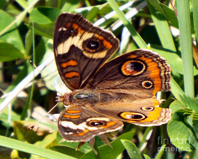 Photograph - Butterfly Stop by Audrey Van Tassell