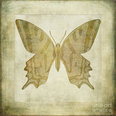 Butterfly Textures Art Print by John Edwards
