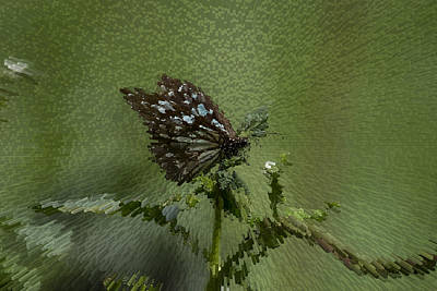 Butterfly The Extruded Photograph Art Print