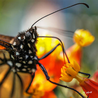 Butterfly Tongue Squared Art Print by TK Goforth