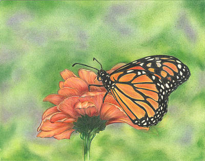 Drawing - Butterfly by Troy Levesque