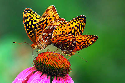Photograph - Butterfly Twins by Christina Rollo