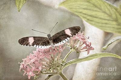 Digital Art - Butterfly Whisper by Peggy Hughes