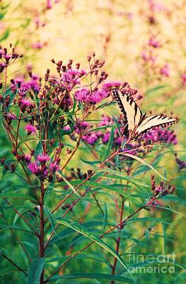 Art Print featuring the painting Butterfly Wildflower by Eric  Schiabor