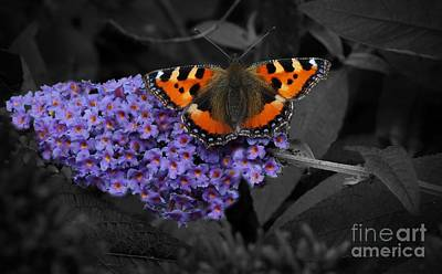 Food And Flowers Still Life Rights Managed Images - Butterfly Wings Royalty-Free Image by MSVRVisual Rawshutterbug