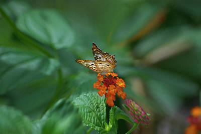 Blue Swallowtail Digital Art - Butterfly Wings Of Sun Light Digital Art 01 by Thomas Woolworth