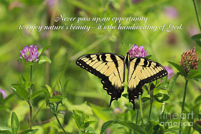 Photograph - Butterfly With Quote by Jill Lang