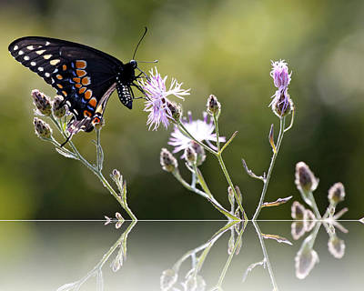 Print featuring the photograph Butterfly With Reflection by Eleanor Abramson