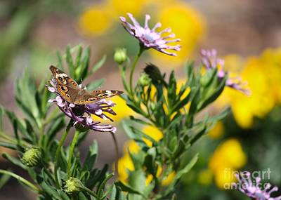 Buckeye Butterfly Photograph - Butterfly World by Carol Groenen
