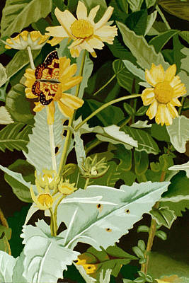 Butterfly Yellow  Art Print by Tanya Provines