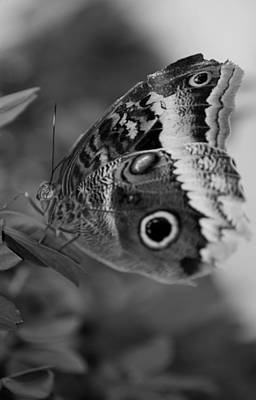 Photograph - Butterfly5 by Rob Hans