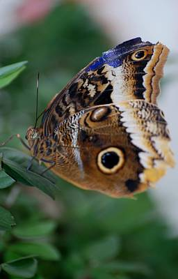 Photograph - Butterfly5c by Rob Hans